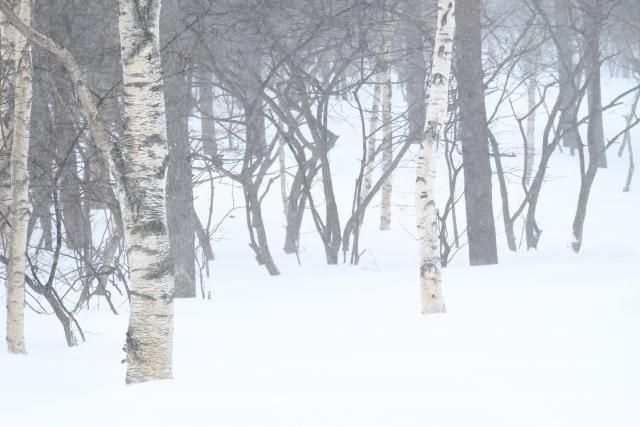 上田の雪景色