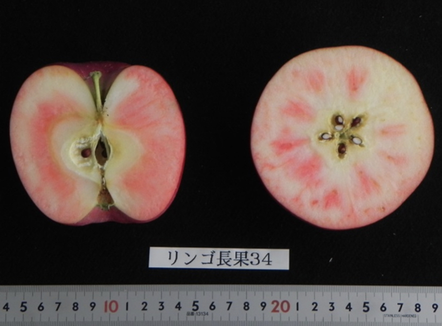 リンゴ長果34
